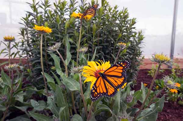 Denver Botanic Gardens - Chatfield Farms Butterflies